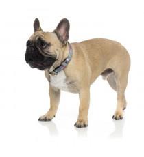 FUZZYARD Collier néoprene Coachella L - 50-65 cm - Pour chien