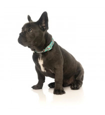 FUZZYARD Collier néoprene Summer Punch M - 32-50 x 2cm - Pour chien