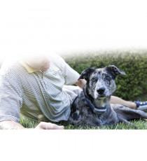 SPORTDOG Collier de dressage 1600 m - Pour chien
